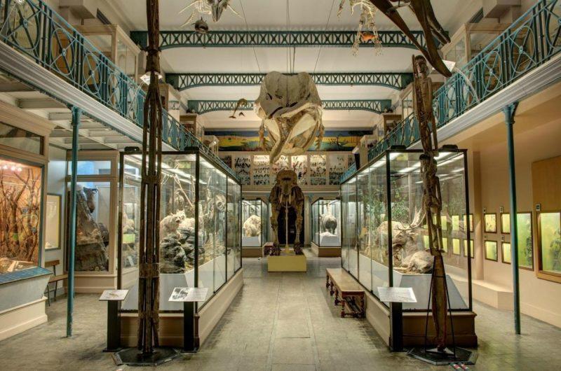 musée Lile_2